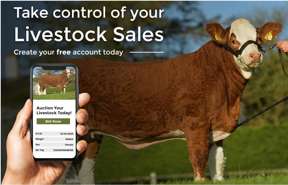 livestock-auctions
